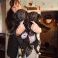щенки в добрые руки, Новосибирск
