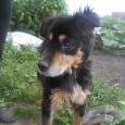 Дружочек самец (пес), Новосибирск