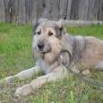 Пес Малыш, Новосибирск