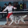 Очаровательный серо-белый мальчик хаски (собака), Новосибирск
