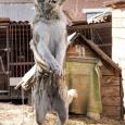 метис среднеазиатской овчарки, девочка, в добрые руки, Новосибирск