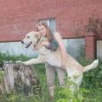 Собака среднеазиатская овчарка в добрые руки, Новосибирск