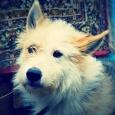 отдается самый добрый  пес, Новосибирск