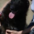 Собака Ночка очень хочет стать домашней ), Новосибирск