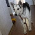 Чудо-собака Бэтти ищет хозяев!, Новосибирск