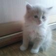 отдам котят, Новосибирск
