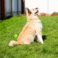 Умница - собака Лаки отдается в хорошую семью!, Новосибирск