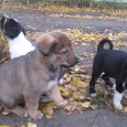щенки ищут дом!, Новосибирск