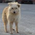 Лохматый пес ищет дом!, Новосибирск