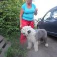 отдам в добрейшие руки щенка, Новосибирск
