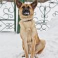 Пес Васька, Новосибирск