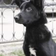 Собака Джуди очень хочет домой, Новосибирск