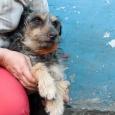 Милый пёсик Шурик ищет дом., Новосибирск