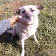 Собака Джеси ищет хозяина, Новосибирск