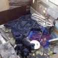 отдаются щенки, Новосибирск