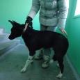 самая ласковая собачка, любящая детей, Новосибирск