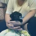отдаются маленькие щенки, Новосибирск