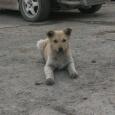 Подарите щенку дом, Новосибирск