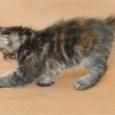 Котенок курильского бобтейла, девочка, Новосибирск