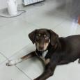 Отдам в добрые руки собаку (девочка, 9 мес.), Новосибирск