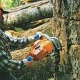 Профессиональная вырубка деревьев. Удаление пней, Новосибирск