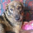 Собака Ляля, Новосибирск