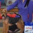 Вельштерьера щенки!, Новосибирск