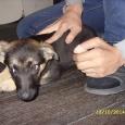 отдается преданный друг (собака), Новосибирск