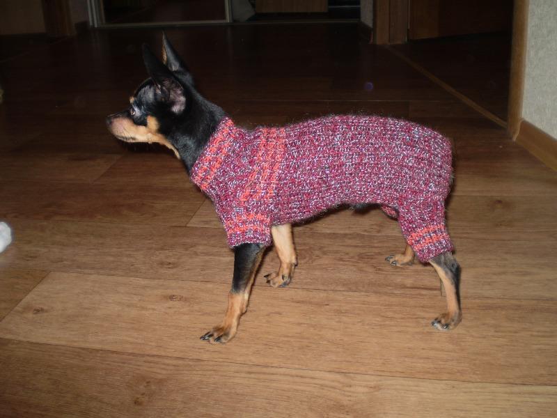 Одежда для собак шить видео