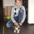 отдается щенок похожий на авчарку (помесь), Новосибирск