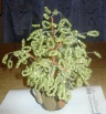 продам денежное дерево из бисера, Новосибирск.