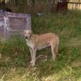 найдена собака со щенками, Новосибирск