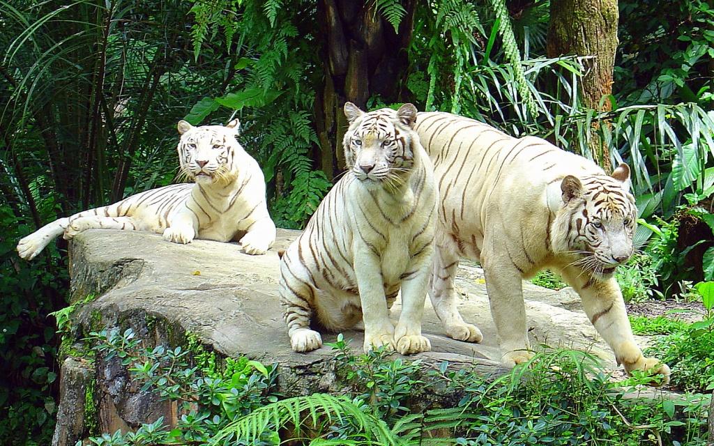 Автор: Eustaquio Santimano. Фото:  www.flickr.com