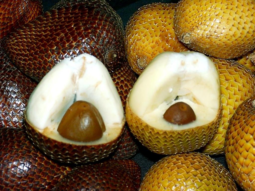 Салак, или змеиный фрукт. Фото: antiteori.or.id