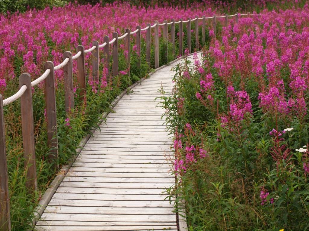 Автор: Anita. Фото:  www.flickr.com