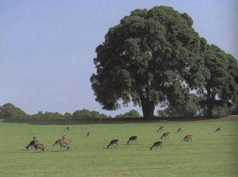 Национальный Парк Бриуны. Фото: www.croatiaclub.ru
