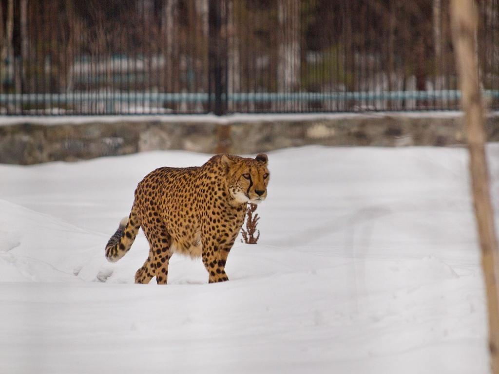 Какое место занимает новосибирский зоопарк в мире