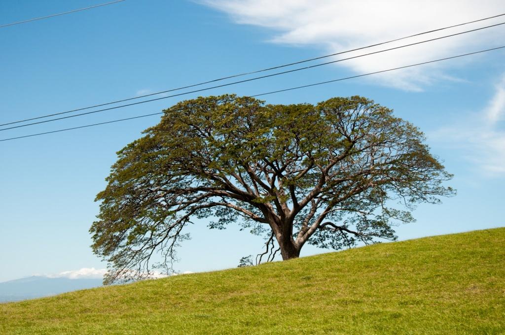Автор: Wendy. Фото:  www.flickr.com