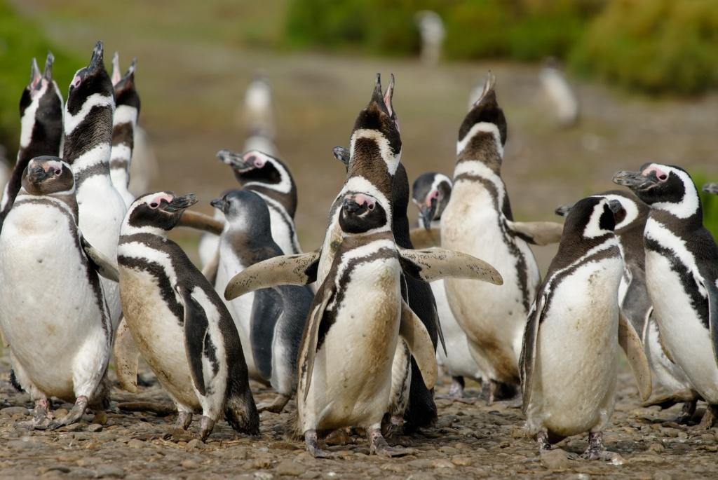 Обитатели аргентинской Патагонии. Фото с сайта:  tonkosti.ru