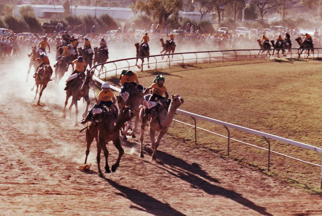 Верблюжьи бега. Автор: Rae Allen. Фото:  www.flickr.com