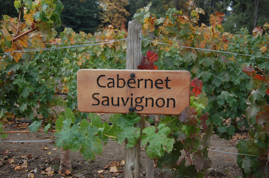 Виноградники. Фото:  Carlos Varela