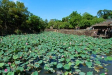 Озеро Лотосов (Lotus Lake)