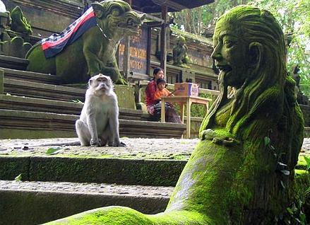 В Лесу обезьян. Фото: uluwatu.org