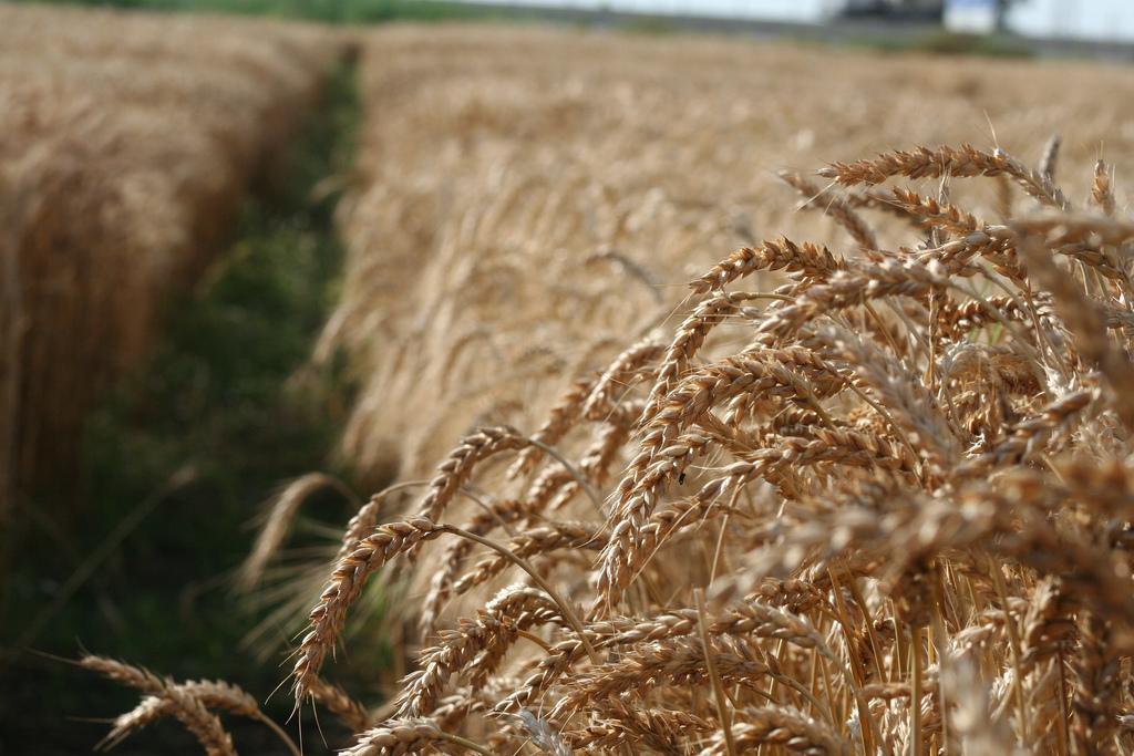Фото:  Global Crop Diversity Trust