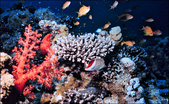 Подводный мир в окрестностях Ялунвань. Фото: travelsanya.net