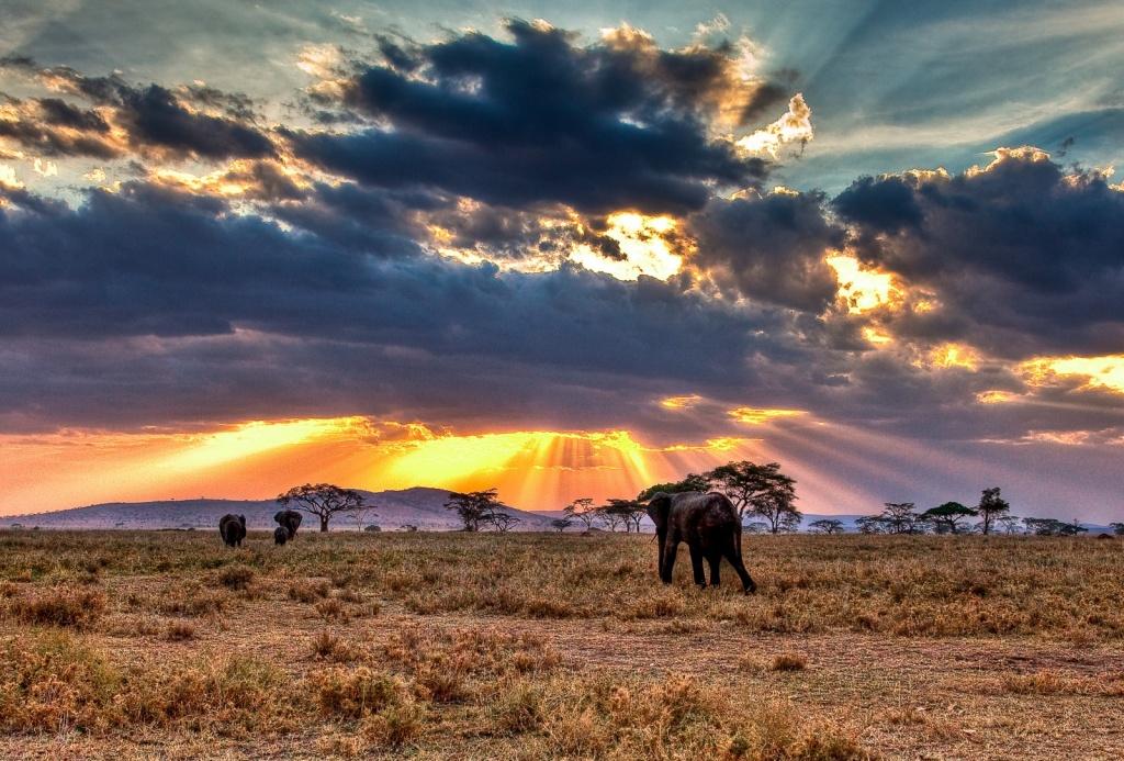 Национальный парк Серенгети. Автор: Feans. Фото:  www.flickr.com