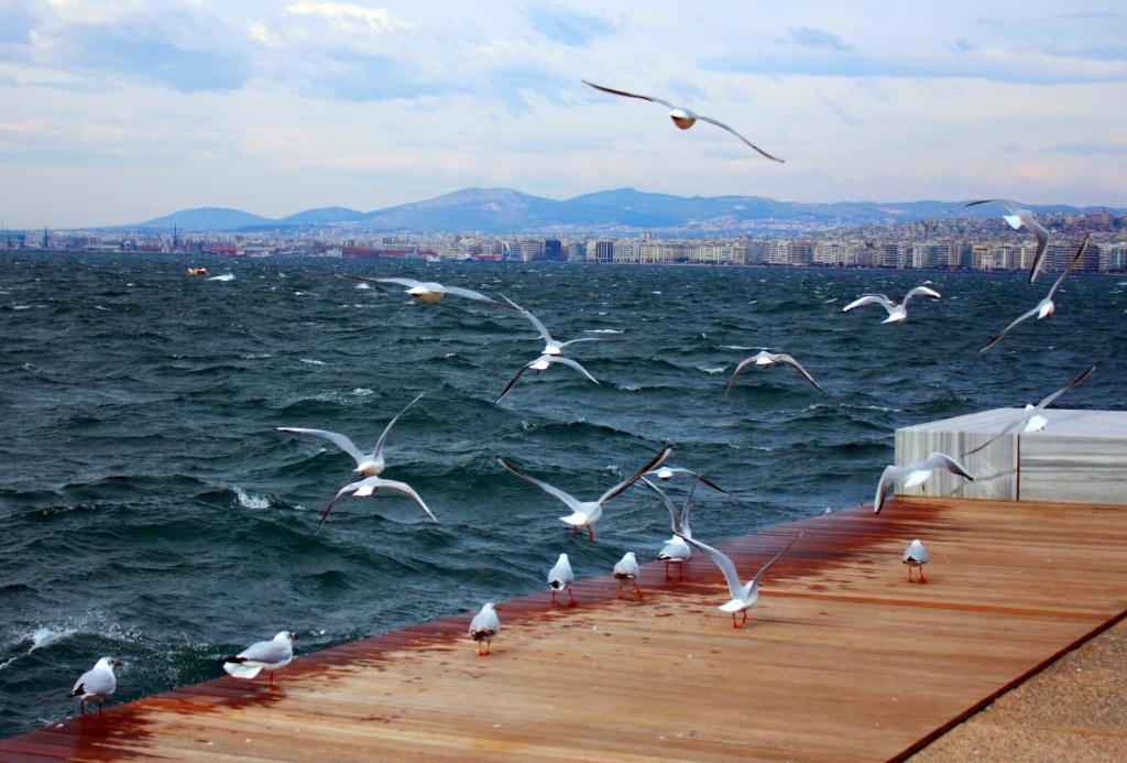 Автор: eleni boulasiki. Фото:  www.flickr.com