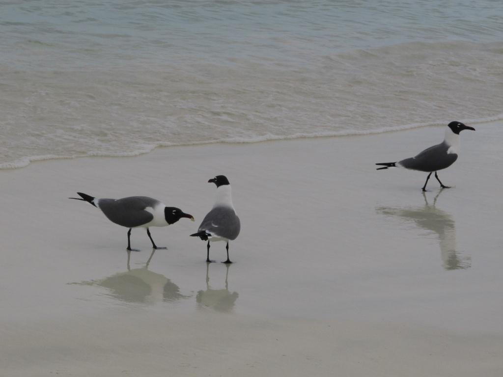 Пляж. Автор: Pat Hawks. Фото:  www.flickr.com