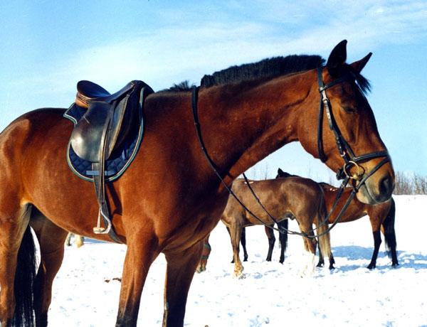 Конный клуб. «Коласпортланд». Фото: www.ski-kolasport.narod.ru
