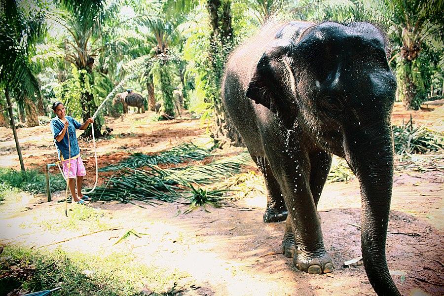 Слон. Автор: Яна Стаханева